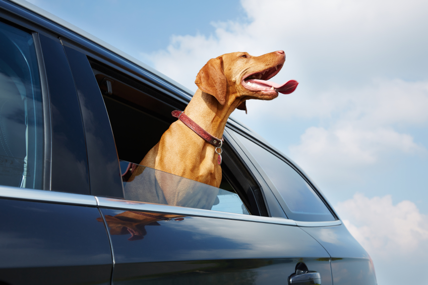 Pets can sometimes cause bad odours to linger in cars