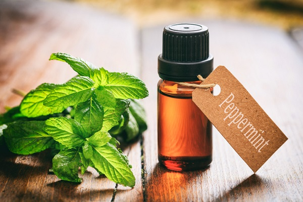 Peppermint oil is one of the most effective tools for protecting a vehicle against rodents