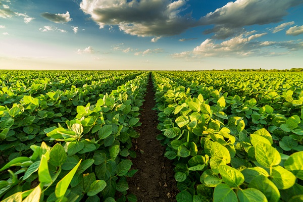 Henry Ford had over 12,000 acres of farmland for growing soybeans