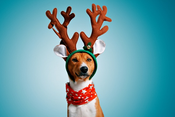 Leave the antlers to Rudolph—or maybe, in this case, to Fido