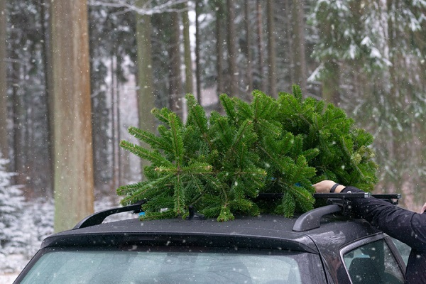 Having a Christmas tree on the roof of a car can reduce the vehicle's mileage by around 30 per cent